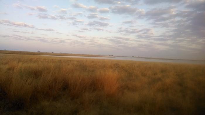 Flat, golden pans in Botswana.